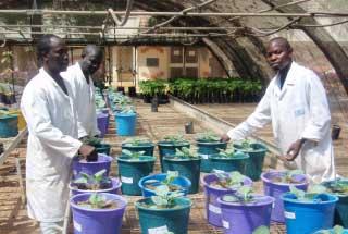 production dans l agrosystème